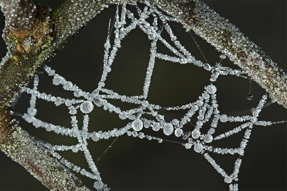 Frozen Dew on a Spider's Web