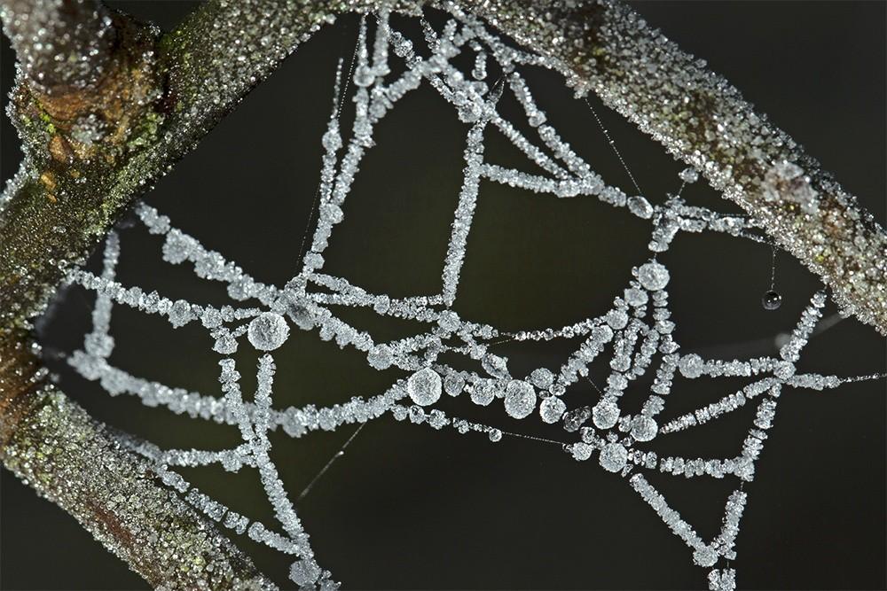 Frozen Dew on a Spider's Web